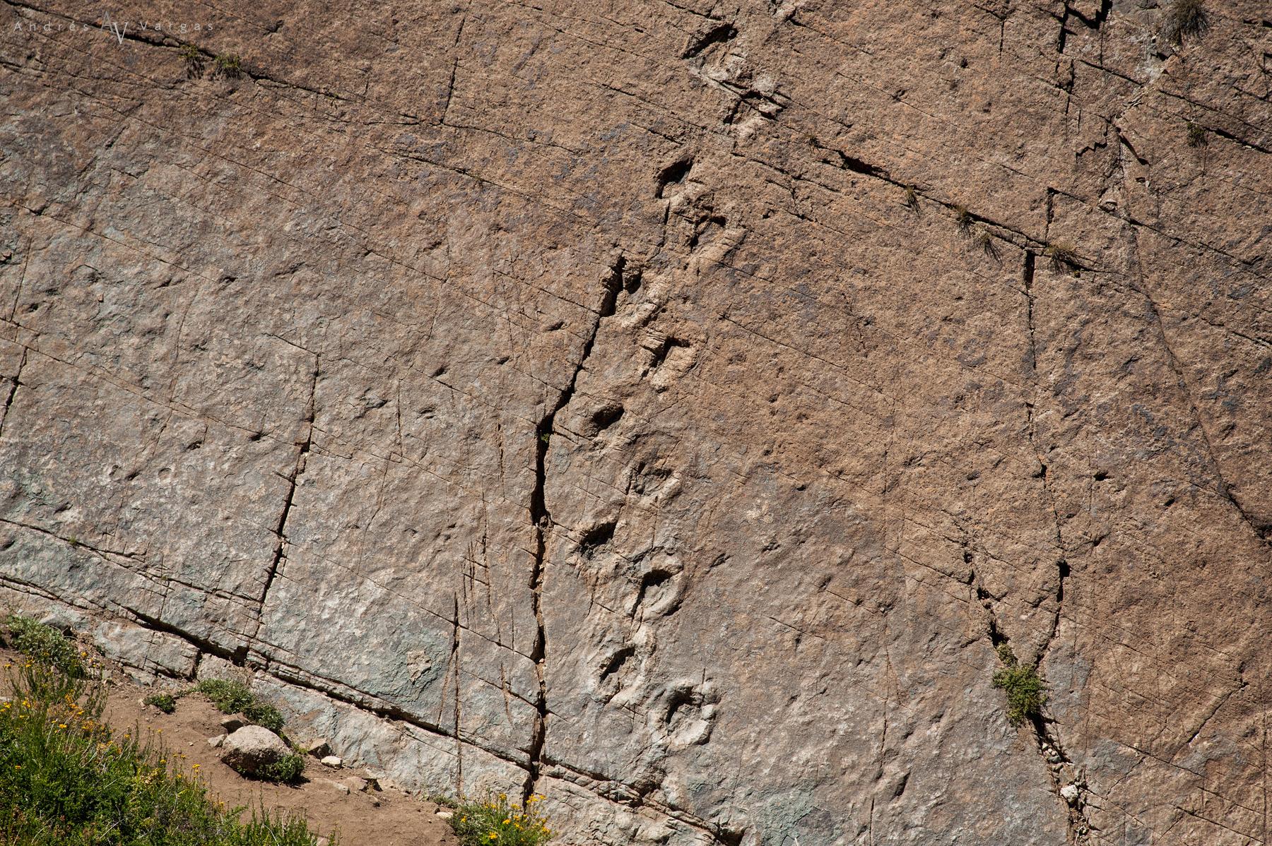 Dinosaurios en Chile - Termas del flaco
