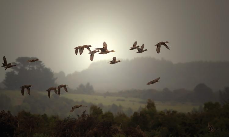 birdgrande