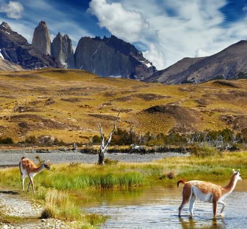 shutterstock_patagoniaok
