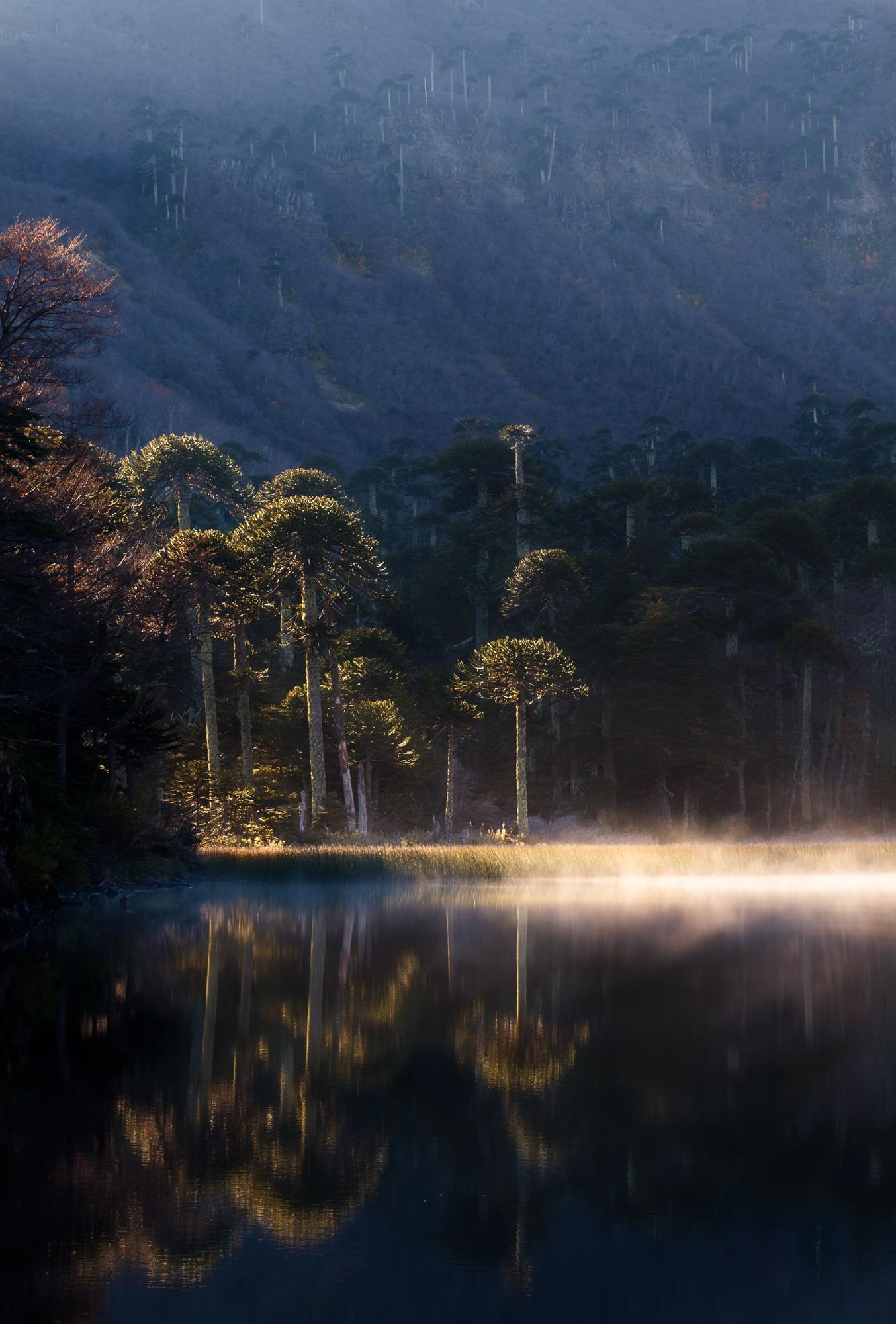 Parque Nacional Tolhuaca-1